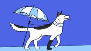 Страховка для вашего домашнего питомца: где застраховать собаку?