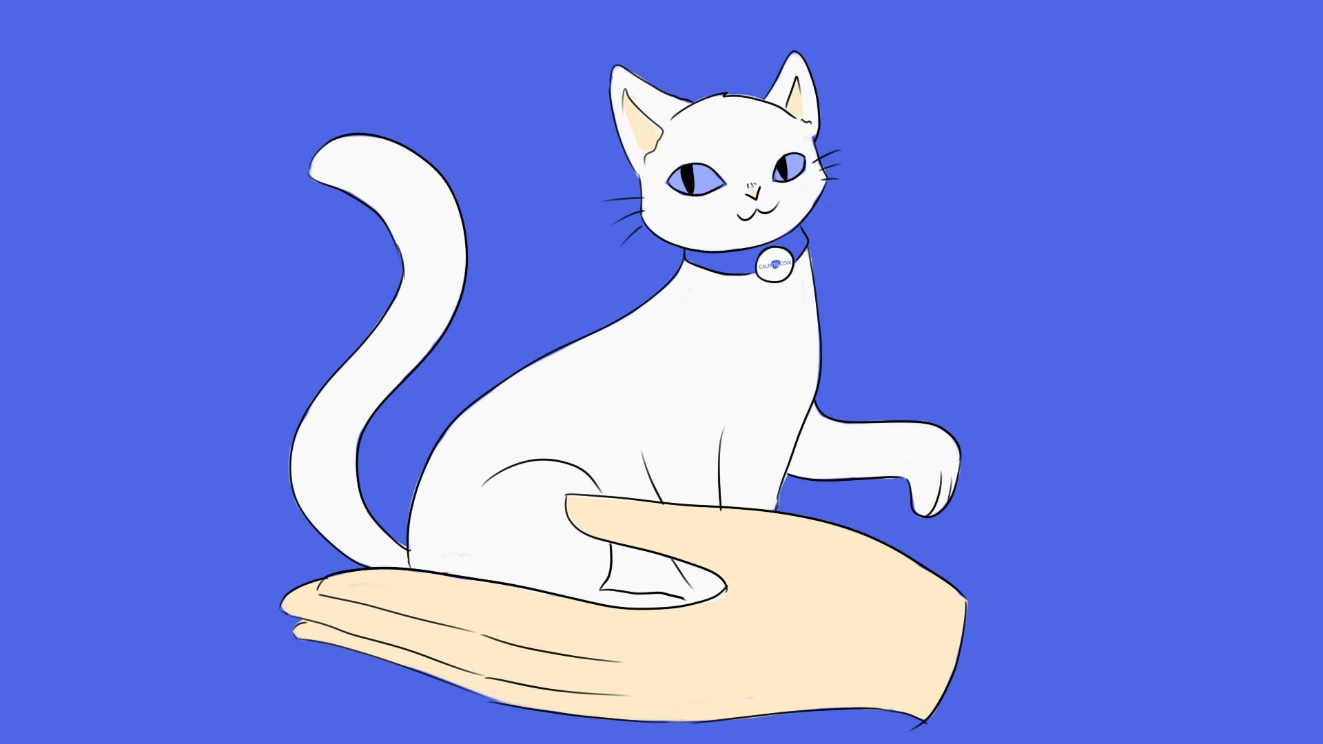 Доступное страхование: где застраховать кота?