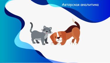 Страхование собак и кошек - экспертное мнение